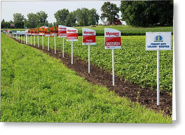 Genetically Modified Crop Signs Greeting Card by Jim West