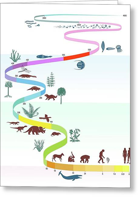 Geological Timescale And Life Greeting Card by Gary Hincks