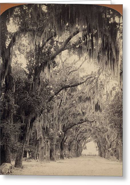 Greeting Card featuring the painting Georgia Oak Trees, C1887 by Granger