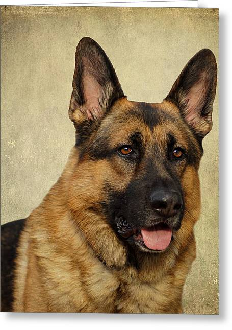 German Shepherd Portrait Greeting Card by Sandy Keeton