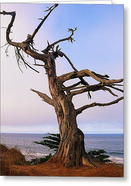 Ghost Tree In Carpinteria Greeting Card by Ron Regalado