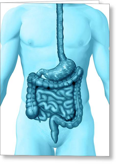 Gi Tract Greeting Card by Carol & Mike Werner