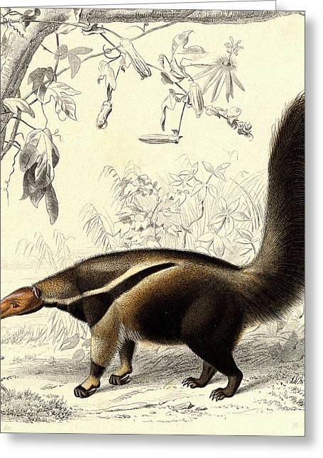 Giant Anteater Greeting Card by Collection Abecasis