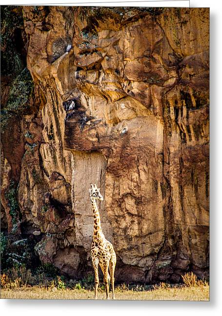 Giraffe Against The Rocks Color Greeting Card