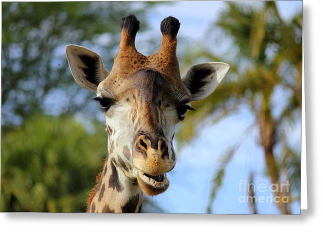 Giraffe Greeting Card by Lisa L Silva