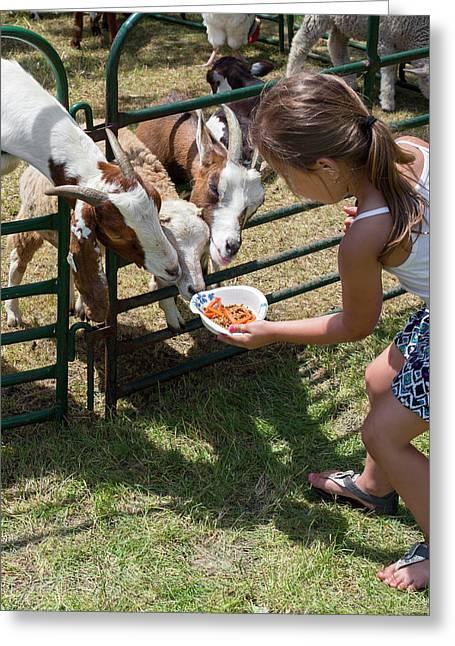 Girl Feeding Goats Greeting Card by Jim West