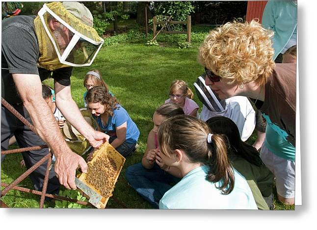 Girl Scouts Learning About Honey Bees Greeting Card