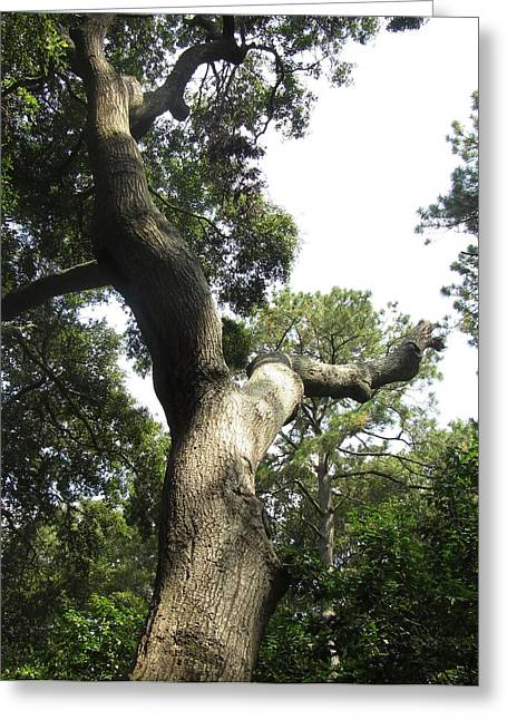 Greeting Card featuring the photograph Gnarled Tree 2 by Cathy Lindsey