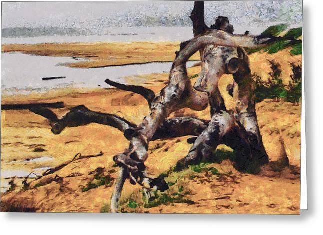 Gnarly Tree Greeting Card by Barbara Snyder