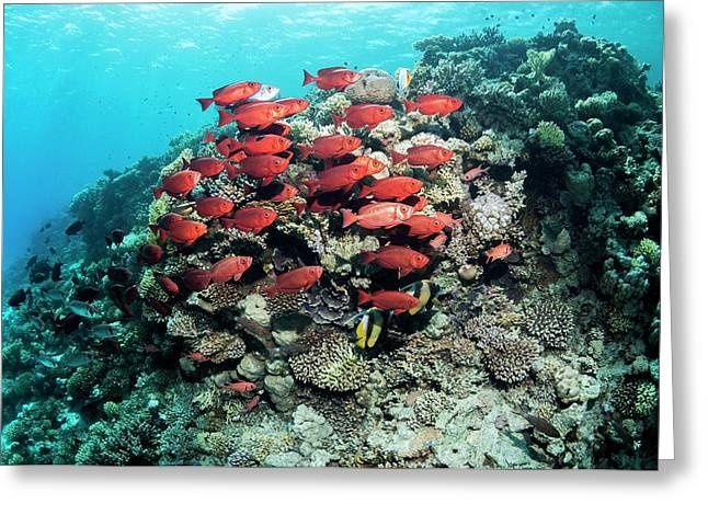 Goggle Eyes On A Reef Greeting Card by Georgette Douwma