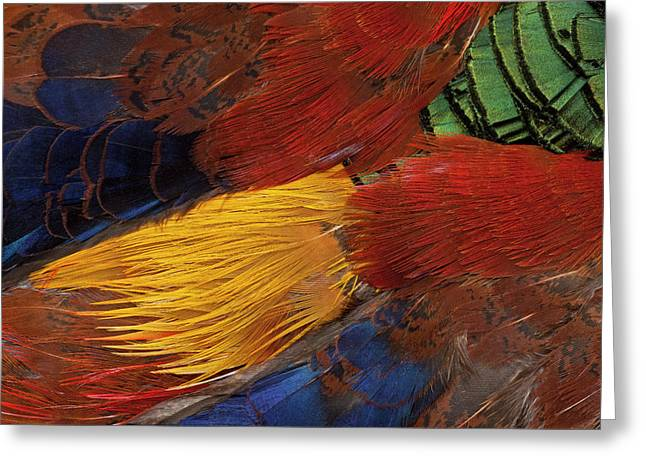 Golden Pheasant Feather Fan Design Greeting Card by Darrell Gulin