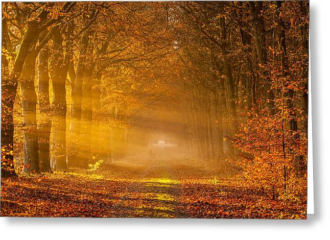 Golden Rays Of Autumn Greeting Card by Ron Buist