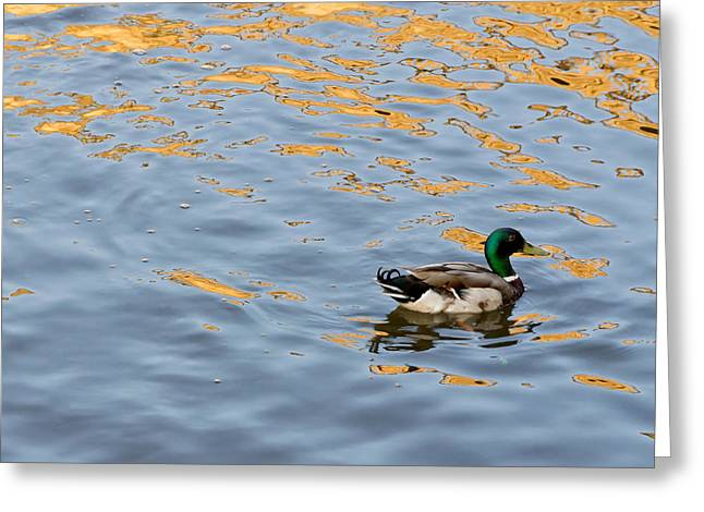 Greeting Card featuring the photograph Golden Ripples by Keith Armstrong