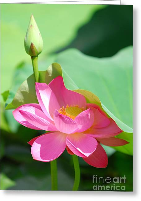 D48l-96 Water Lily At Goodale Park Photo Greeting Card