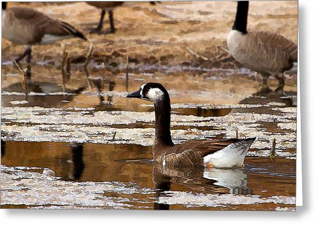 Goose Pond Greeting Card