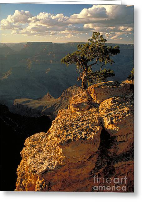 Grand Canyon Greeting Card by George Ranalli