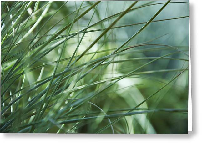Grass Abstract Greeting Card by Sabina  Horvat