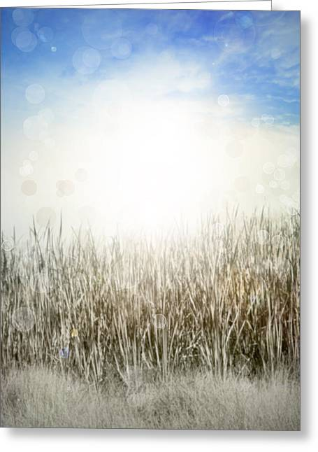 Grass And Sky  Greeting Card by Les Cunliffe