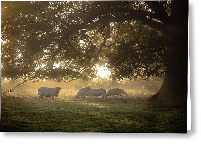 Grazing Under The Tree - Variation 1 Greeting Card by Chris Fletcher