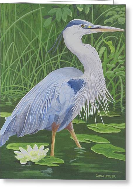 Great Blue Heron Greeting Card by James Lawler