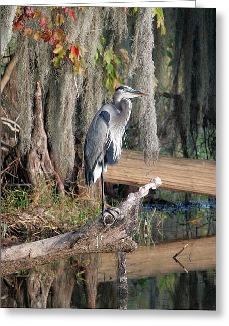 Great Blue Heron Greeting Card by Jeff Wright
