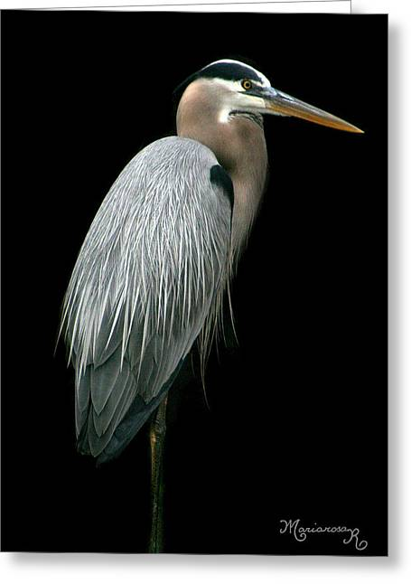 Great Blue Heron Greeting Card by Mariarosa Rockefeller