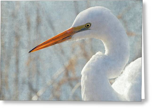 Great Egret Greeting Card by Angie Vogel