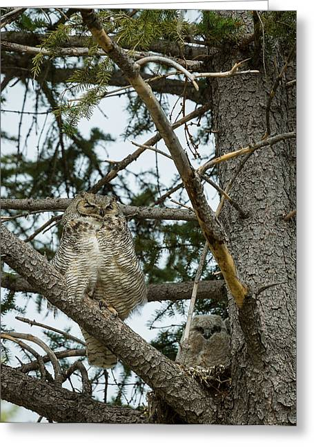 Great Horned Owls Greeting Card