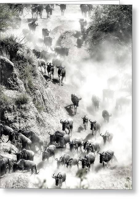 Great Migration Greeting Card