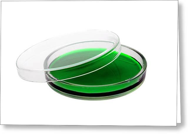 Green Agar Plate Greeting Card
