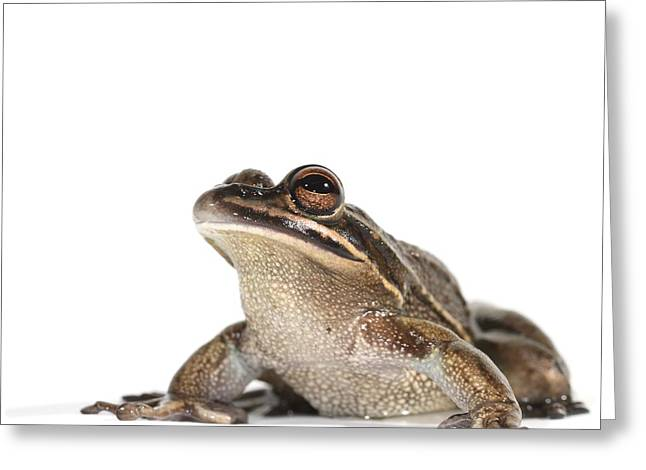 Green And Golden Bell Frog Greeting Card