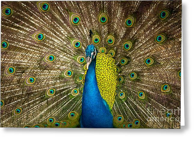 Green Beautiful Peacock Greeting Card