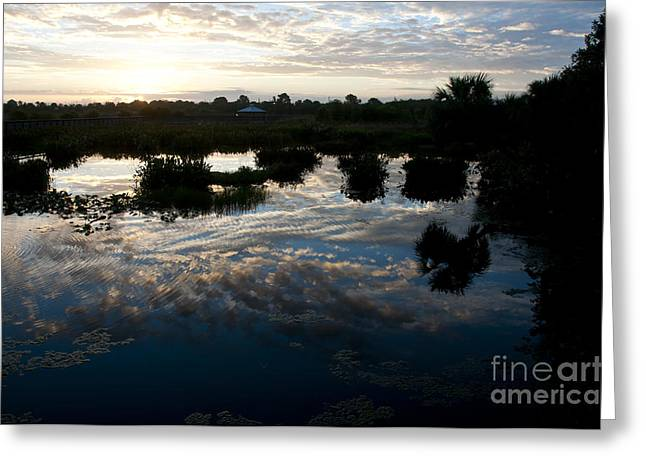 Green Cay Wetlands, Fl Greeting Card by Mark Newman