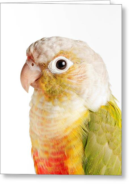 Green-cheeked Conure Pineapple P Greeting Card