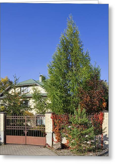 Green Fence Of Trees And Shrubs Greeting Card by Aleksandr Volkov