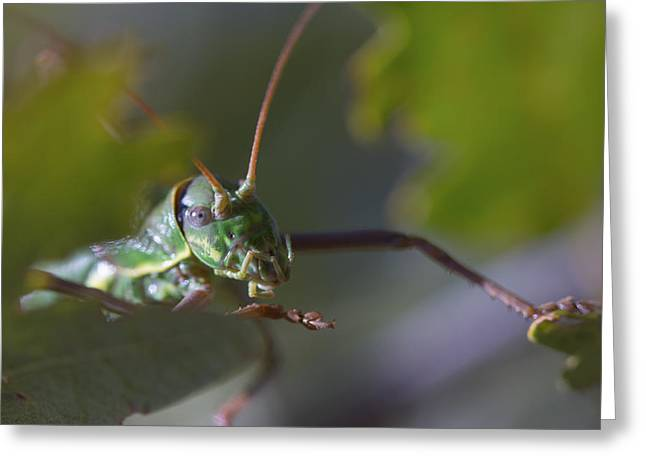 Greeting Card featuring the photograph Green Grasshopper Ephippiger by Jivko Nakev
