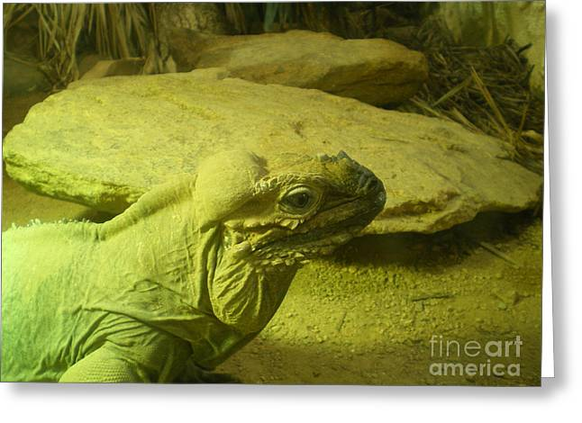 Green Iguana  Greeting Card by Ann Fellows