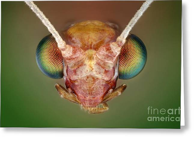 Green Lacewing Greeting Card by Matthias Lenke