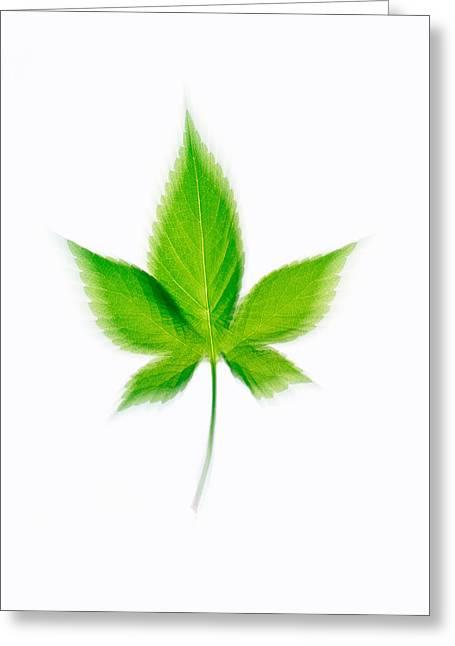 Green Leaf On Beige Background Greeting Card