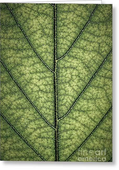 Green Leaf Texture Greeting Card by Elena Elisseeva