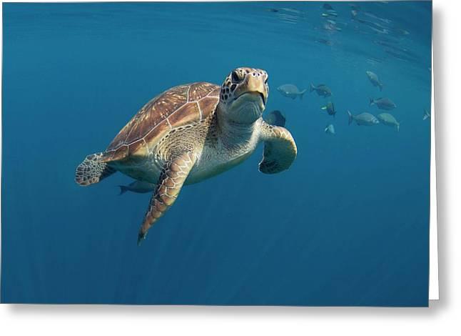 Green Turtle Swimming Greeting Card