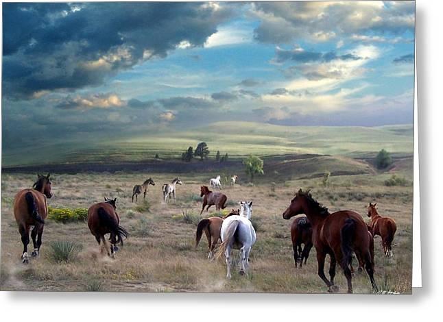 Greener Pastures Greeting Card by Bill Stephens