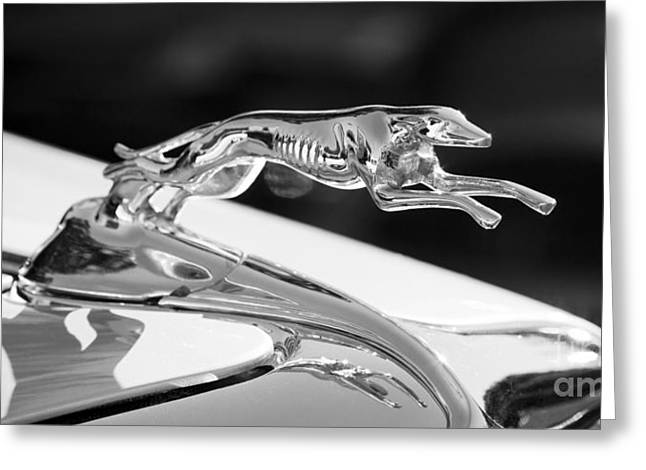 Greyhound Hood Ornament Greeting Card
