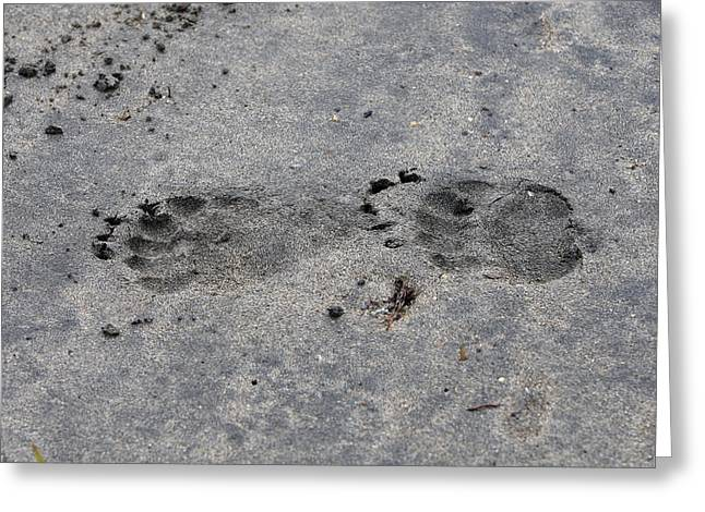 Grizzly Bear Tracks Greeting Card