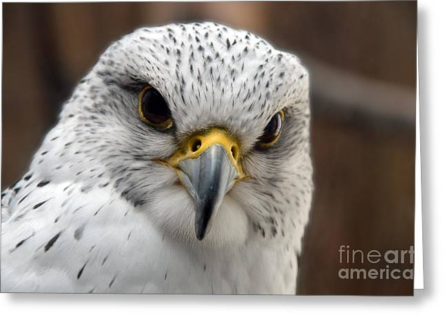 Gryfalcon Close Up Greeting Card
