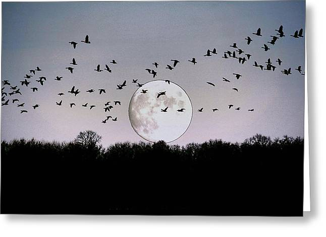 Guided By The Moon Greeting Card by Larry Trupp