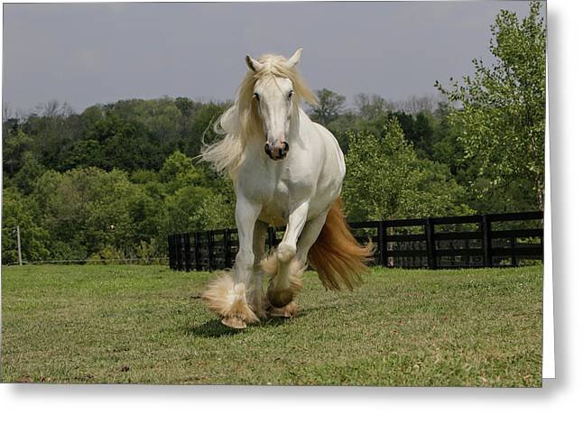 Gypsy Vanner Horse Running, Crestwood Greeting Card