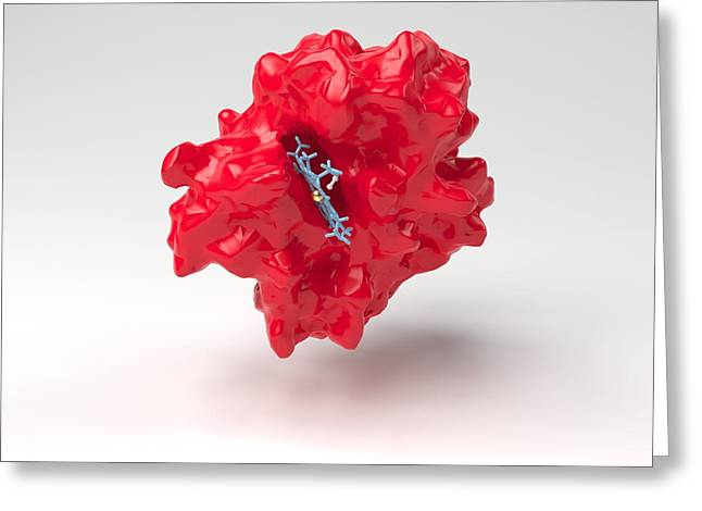 Haemoglobin Molecule Greeting Card by Science Photo Library