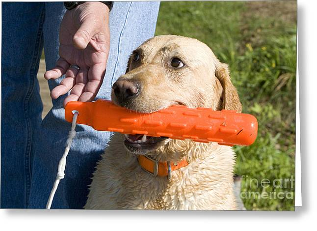 Hand Reaching For Dogs Toy Greeting Card by Linda Freshwaters Arndt