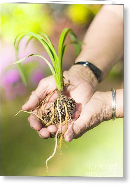 Hands Holding Plant Greeting Card
